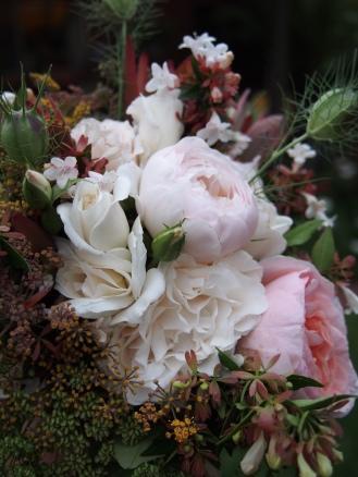 Saint cecilia rose